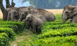 When neither wildlife nor humans respect borders | Human-Wildlife Conflict: Who Has the Right of Way? | Scoop.it