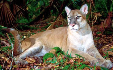 Wildlife: The Next Big Thing in Genetic Modification? - Care2.com   SynBio   Scoop.it
