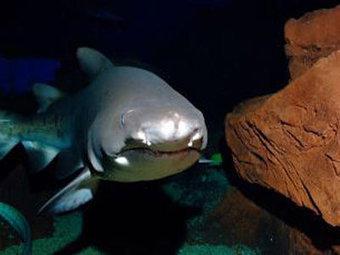 Le Summer Racing Shark Tour fait étape à l'aquarium Mare Nostrum ... | Requins en Péril | Scoop.it