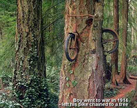 A boy left his bike chained to a tree when he went to war | photo | Community Village Daily | Scoop.it