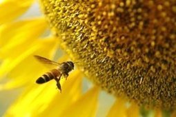 L'Europe veut interdire des pesticides   Toxique, soyons vigilant !   Scoop.it