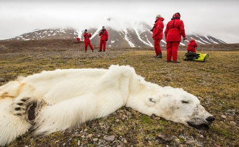 This is Not a Polar Bear Suit. Learn the Sad Truth Behind This Photo | Nature Animals humankind | Scoop.it