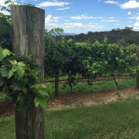 Japan free trade deal brings benefits for Hunter wine and beef sales | Grande Passione | Scoop.it