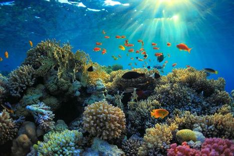 Top Seven Budget Dive Destinations - Scuba Diver Life | Planet Earth | Scoop.it