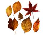 Autumn leaf display | CSIRO | Science | Scoop.it