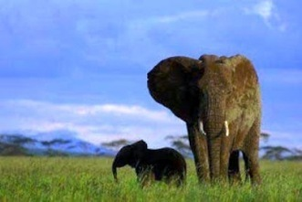 Harsher anti-poaching measures touted | Wildlife Trafficking: Who Does it? Allows it? | Scoop.it