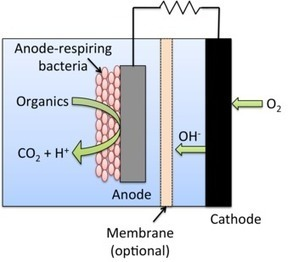 Waste to watts: Improving microbial fuel cells | FuelCellsWorks | mikrobiologija | Scoop.it
