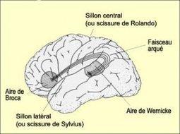Les avantages du bilinguisme | Bilinguisme précoce | Scoop.it
