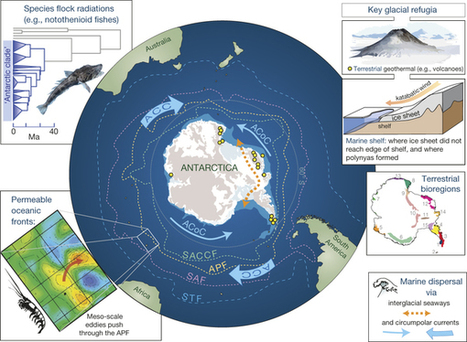 The changing form of Antarctic biodiversity | Papers | Scoop.it