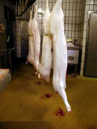 El Mercado nos llama | Producción de porcinos | Scoop.it