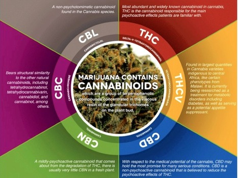 CannaDx™ Sensor - A Cannabinoids portable analyser for medicinal cannabis users coming soon | Drugs, Society, Human Rights & Justice | Scoop.it