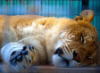 Mac OS X Lion Review: What Roars, What Snores | Xposed | Scoop.it