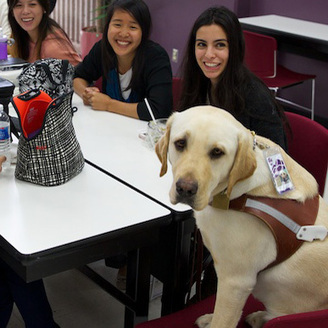 Pre-Optometry Students Inspired by Low Vision Rehab Assistant ... | independent living aids | Scoop.it
