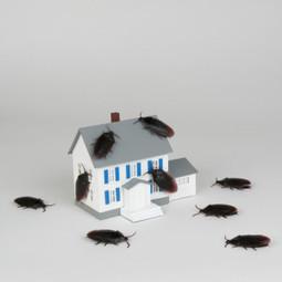 Pest Relief   Pest Relief   Scoop.it