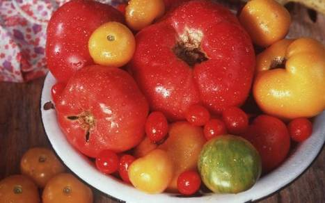 Slice into a tomato, the juicy icon of summer | Vegetable Gardening Resources | Scoop.it