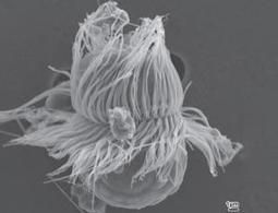 Zoologger: Unique life form is half plant, half animal - life - 13 January 2012 - New Scientist | Popular Science | Scoop.it
