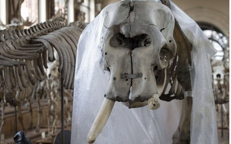 King Louis XIV's pet elephant attacked with chainsaw | No Such Thing As The News | Scoop.it