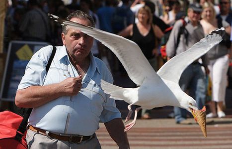 30 Perfectly Timed Photos | xposing world of Photography & Design | Scoop.it