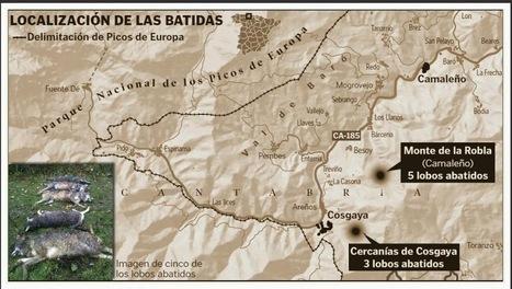 Naturaleza y Medio Ambiente: Denuncian la muerte de nueve lobos de Riaño en el límite del parque nacional   Agua   Scoop.it
