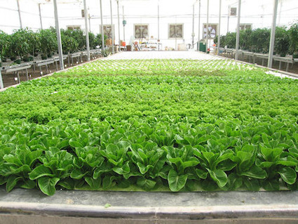 Hydroponic Advance Goes Commercial - Farm Progress | Vertical Farm - Food Factory | Scoop.it