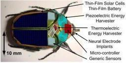 Insect cyborgs... | No Such Thing As The News | Scoop.it