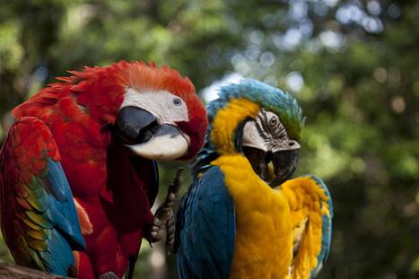 Colombia, ganó el primer puesto como mejor destino turístico para los chinos   DescubreChía   Scoop.it