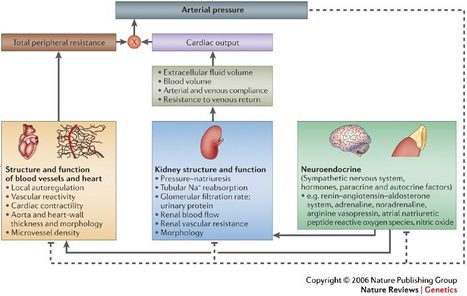 DNA determinants of Blood Pressure Response to Antihypertensives | Heart and Vascular Health | Scoop.it