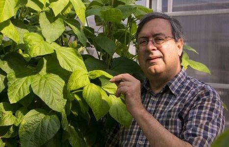 Low-Allergen Soybean Could Have High Impact | UANews | CALS in the News | Scoop.it
