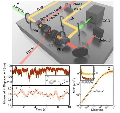 First Quantum-Enhanced Images of a Living Cell | MIT Technology ... | Biosciencia News | Scoop.it