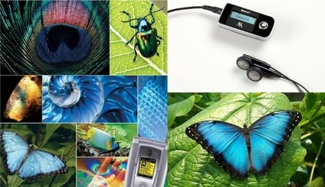 Alas de mariposa para las pantallas electrónicas - Hoy Digital | Nanotechnoly and Materials | Scoop.it