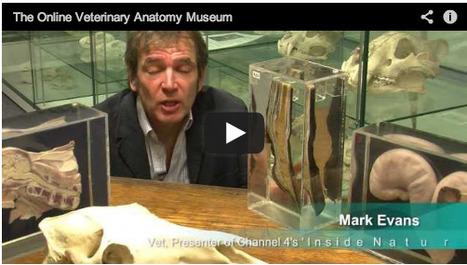 Video: Inside the Online Veterinary Anatomy Museum with Mark Evans | Elearning Vet | Scoop.it