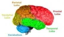 Un nuevo software permite compartir imágenes cerebrales - Tendencias Científicas   Investigación Educativa   Scoop.it