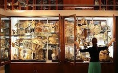 Grant Museum of Zoology | Days out in the UK | WideCow | WideCow for Days Out, Places to Go and Things to Do all over the UK | Scoop.it