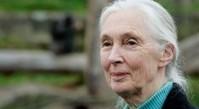 El Instituto Jane Goodall trabaja en Senegal para conservar a los chimpancés | ZoomEstilo | Scoop.it