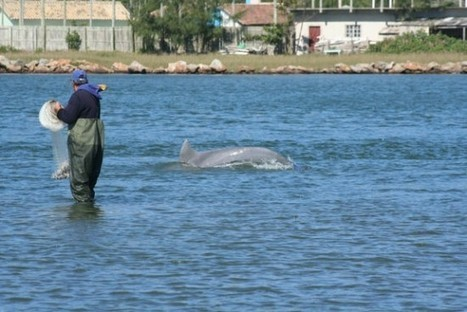 In This Brazilian Town Dolphins Have Been Helping Locals Fish for Over a Century | Strange days indeed... | Scoop.it