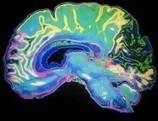 Vinculan la enfermedad del Alzhéimer con infecciones por hongos | Tercera edad. Alzheimer | Scoop.it
