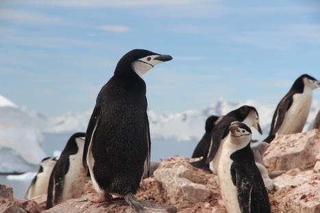 Google déploie Penguin 4.0 : l'algorithme est désormais mis à jour en temps réel - Blog du Modérateur | Freewares | Scoop.it