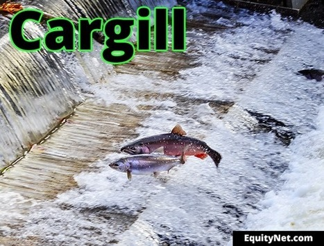 Cargill revolutionises aquaculture industry with customised shrimp feed | Aquaculture Directory | Aquaculture Directory | Scoop.it