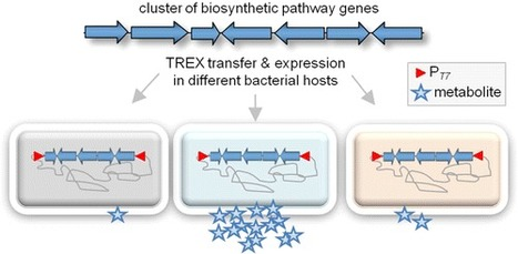 TREX: A Universal Tool for the Transfer and Expression of Biosynthetic Pathways in Bacteria | SynBioFromLeukipposInstitute | Scoop.it