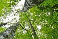 New study aims to get answers on 'green growth' | Green Economy Coalition | Society that learns | Scoop.it