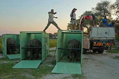 First Rhinos in Massive African Airlift Released in Botswana | Biodiversity protection | Scoop.it
