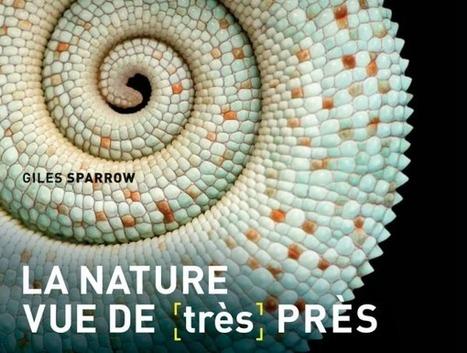 Dossier : les images étonnantes de la nature vue au microscope | Insect Archive | Scoop.it