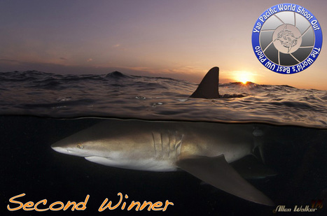 Winners of the Yap Pacific World Shoot Out 2013 | Indigo Scuba | Scoop.it