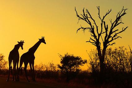 Lessons from an African Safari | Amanda Fenton | Art of Hosting | Scoop.it