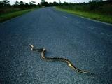Invasive Species, Invasive Plants, Invasive Animals - National Geographic | Geography | Scoop.it