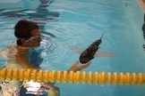 Robotic Fish Patrol Waters for Pollutants   Robots and Robotics   Scoop.it