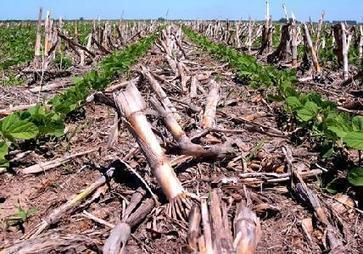 Suelos: cómo evitar que pierdan su riqueza - Nea Rural | Cambio climático | Scoop.it