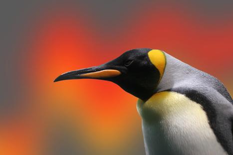 Linux 3.13 va mettre l'accent sur les SSD et la gestion de l'énergie | Geeks | Scoop.it