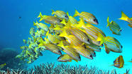 Fish getting skin cancer from UV radiation, scientists say - Los Angeles Times   APS Instructional Technology ~ Science Content   Scoop.it