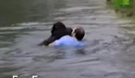 Man Jumps Into Zoo Enclosure To Save A Drowning Chimp | Compassion in Action | Scoop.it